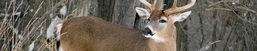 deer-hunting 2